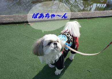 c0163878_15315647.jpg