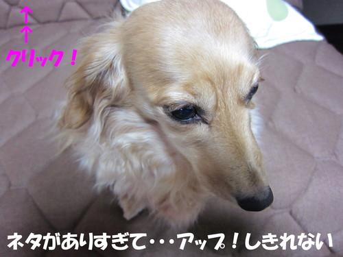 b0200291_2210286.jpg