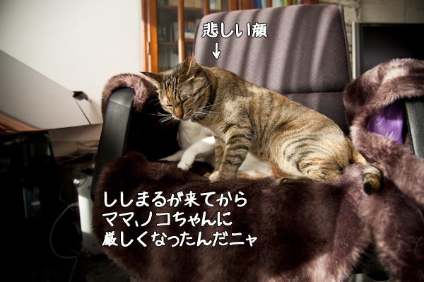 b0141397_1048887.jpg