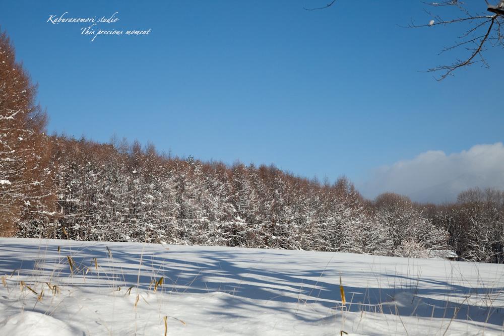この冬一番!白銀の中を歩く_c0137403_2145578.jpg