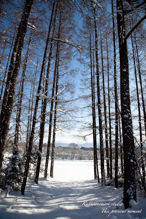 この冬一番!白銀の中を歩く_c0137403_21462483.jpg