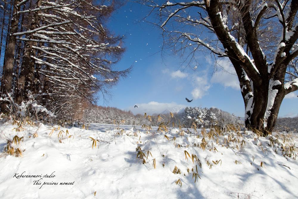 この冬一番!白銀の中を歩く_c0137403_21471256.jpg