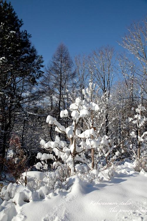 この冬一番!白銀の中を歩く_c0137403_22292161.jpg