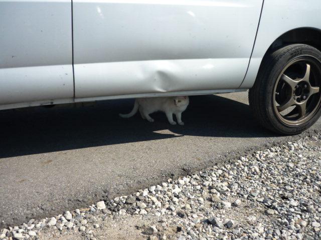 今日は何の日?猫の日(=^▽^=)_c0213517_11422339.jpg