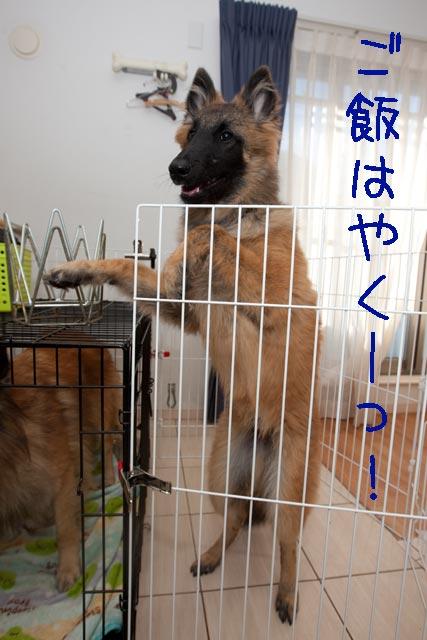 お腹空いたよ〜_e0192921_22141356.jpg
