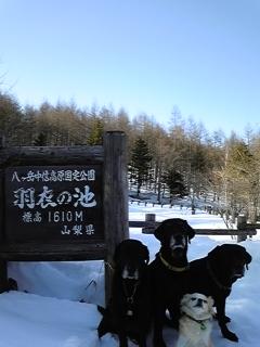 新散歩道_f0148927_2336338.jpg