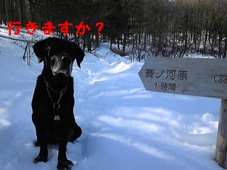 新散歩道_f0148927_23404349.jpg