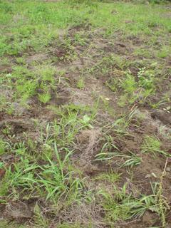 大豆の種まきをしました。_b0124636_2057159.jpg