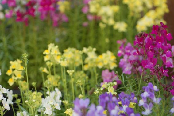 春のガーデニング_a0060141_17434782.jpg