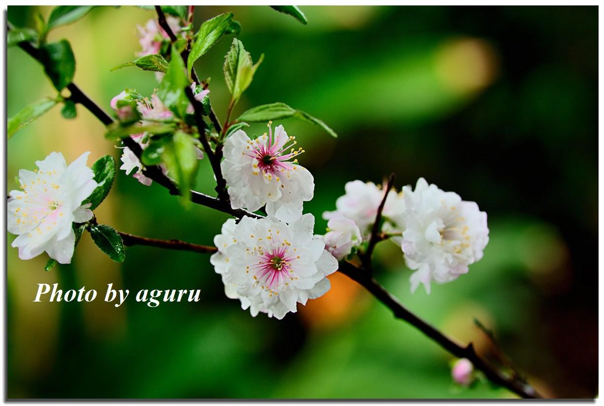 f0160241_011983.jpg