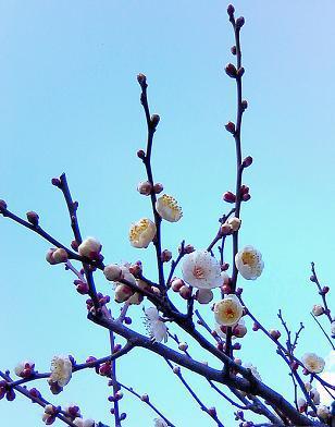 春のおとずれ_f0206741_1364382.jpg