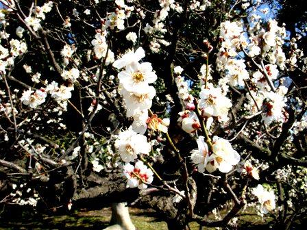 気づきの京都…愛を持って受け流す。_c0156749_16125915.jpg