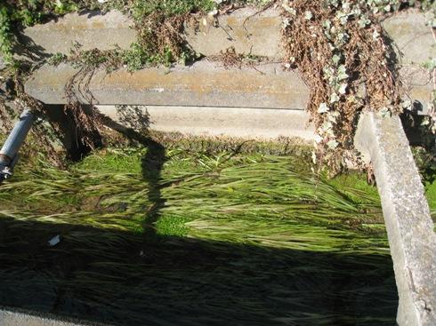 岩代清水の泉と池をめぐる22_a0087378_5514264.jpg