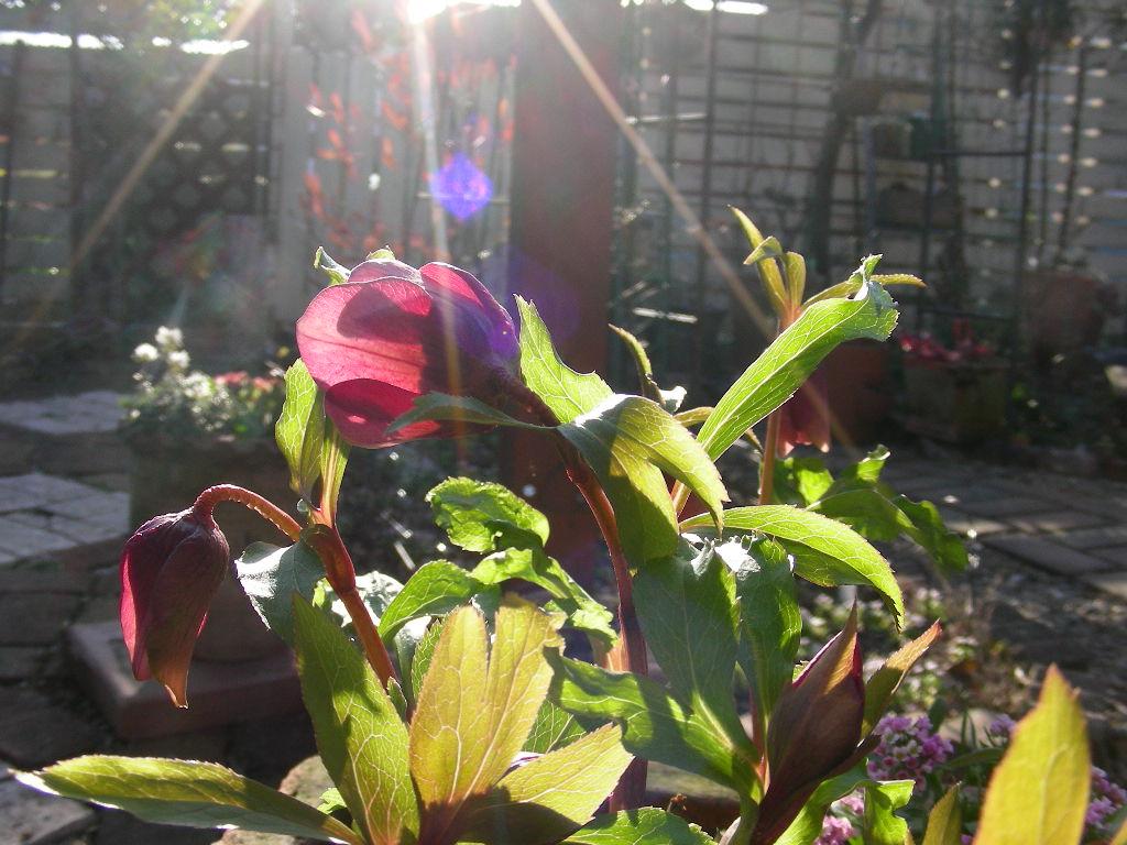 今日も楽しく庭遊び~♪_b0096584_2364099.jpg