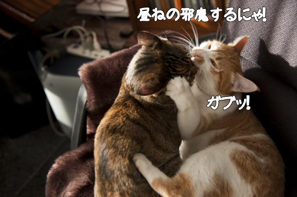 b0141397_10412429.jpg