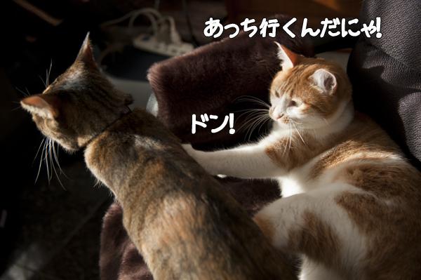 b0141397_10415167.jpg