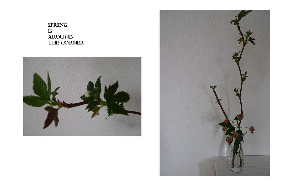 Spring is around the corner!!!!_a0188798_13193348.jpg