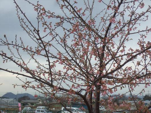 桜祭り.....寒い中震えながら!_b0137932_20102110.jpg