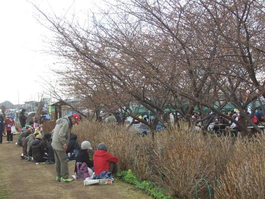 桜祭り.....寒い中震えながら!_b0137932_2011457.jpg