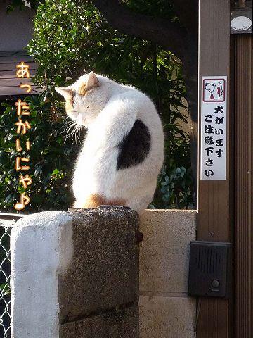 早咲き桜_c0062832_19281547.jpg