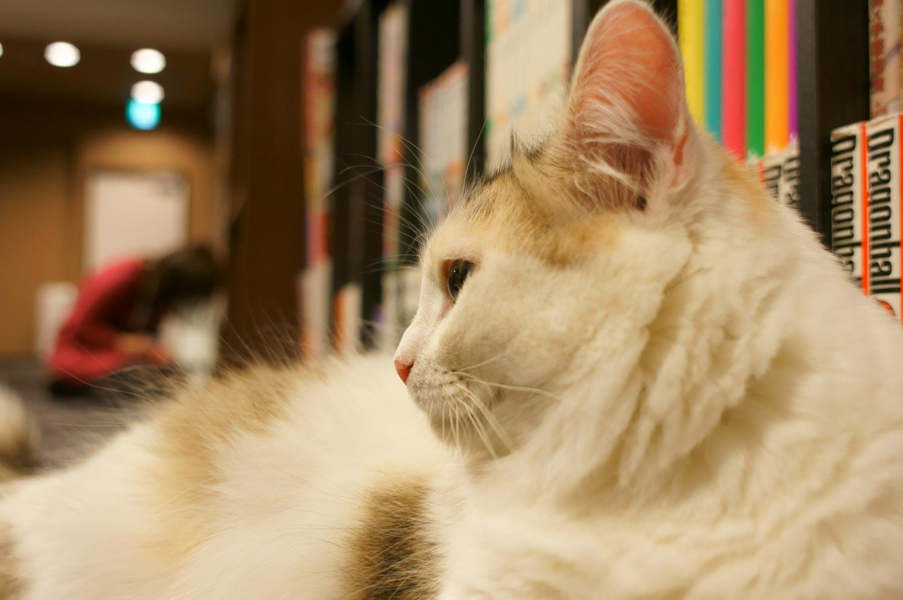 猫写真 5_e0216133_2303680.jpg