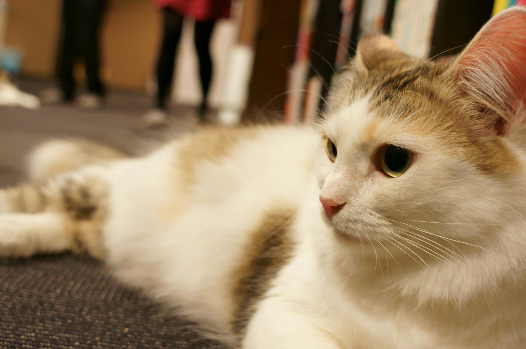 猫写真 5_e0216133_2304667.jpg