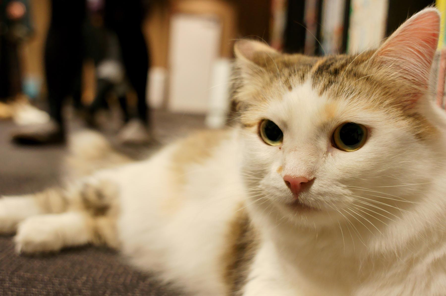 猫写真 5_e0216133_2304931.jpg