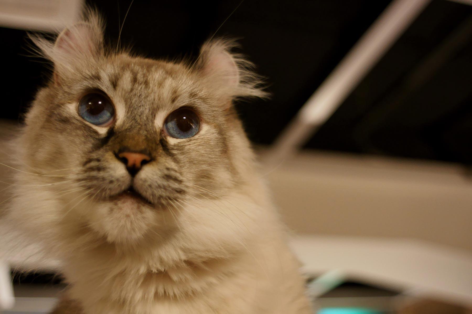 猫写真 5_e0216133_2305456.jpg