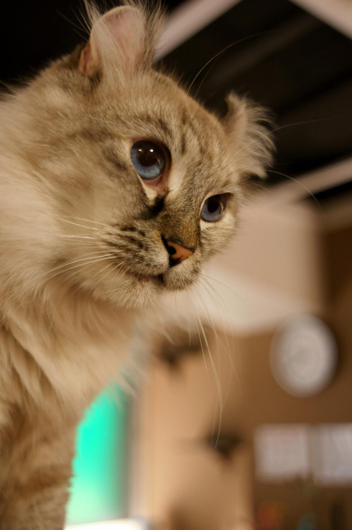 猫写真 5_e0216133_23103.jpg
