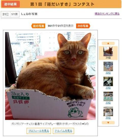 Yahoo!ペットダブルフォトコンテスト猫 ぽーしぇる編。_a0143140_2314526.jpg