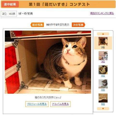 Yahoo!ペットダブルフォトコンテスト猫 ぽーしぇる編。_a0143140_23185115.jpg