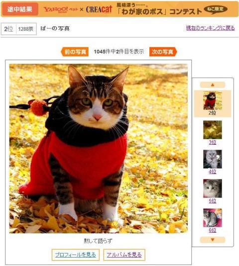 Yahoo!ペットダブルフォトコンテスト猫 ぽーしぇる編。_a0143140_23252597.jpg