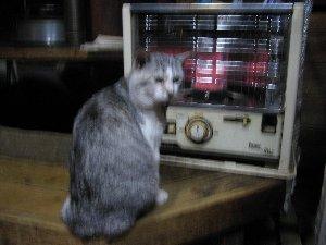 猫焼き?_c0146040_1848541.jpg