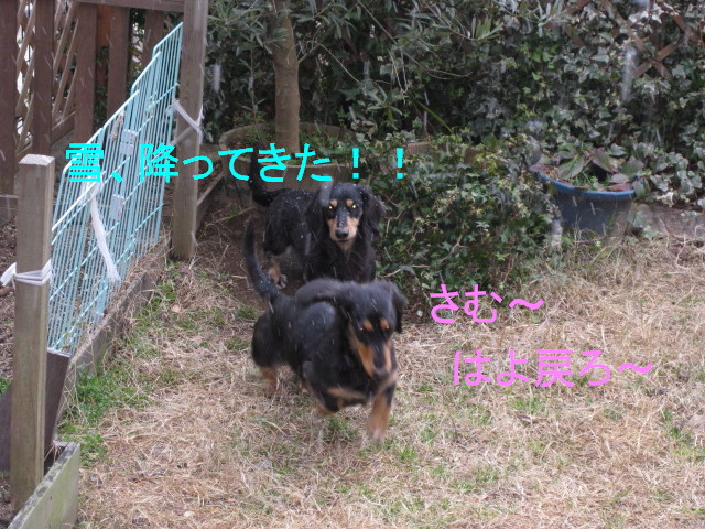 b0181341_15371359.jpg