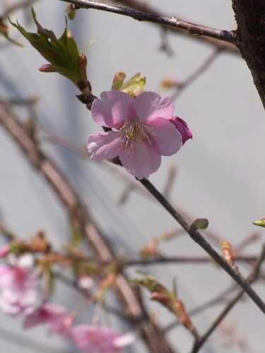 春ですね~_f0082141_1447789.jpg