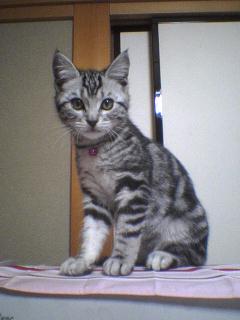 2月22日は 猫の日です!_e0179943_1382113.jpg