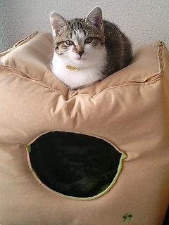 2月22日は 猫の日です!_e0179943_1385211.jpg