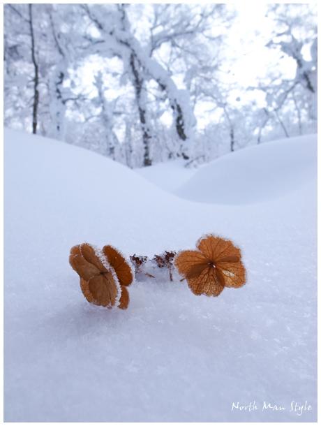 雪中花_a0114060_1847587.jpg