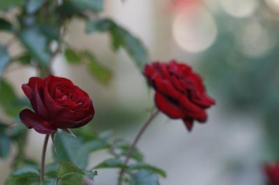 d0141365_2303768.jpg
