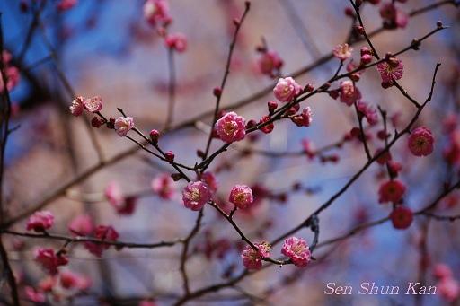 花の回廊「早春の草花展」と梅_a0164068_1201297.jpg