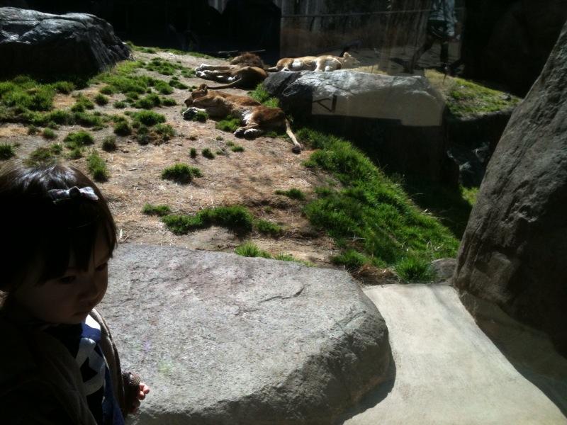 天王寺動物園!_e0157573_18574837.jpg