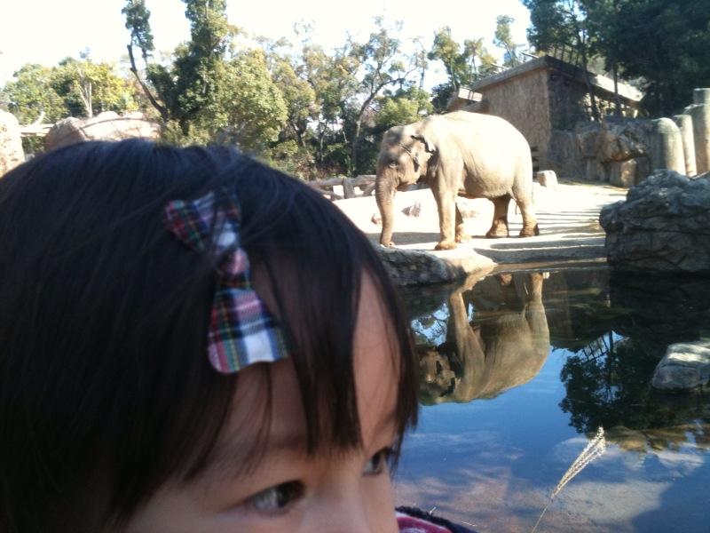 天王寺動物園!_e0157573_18585281.jpg