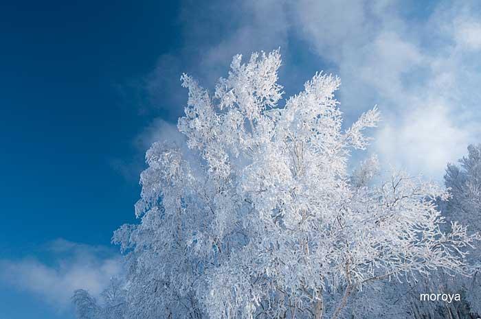 白い風景_c0085877_7112755.jpg
