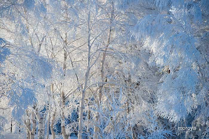 白い風景_c0085877_7113710.jpg
