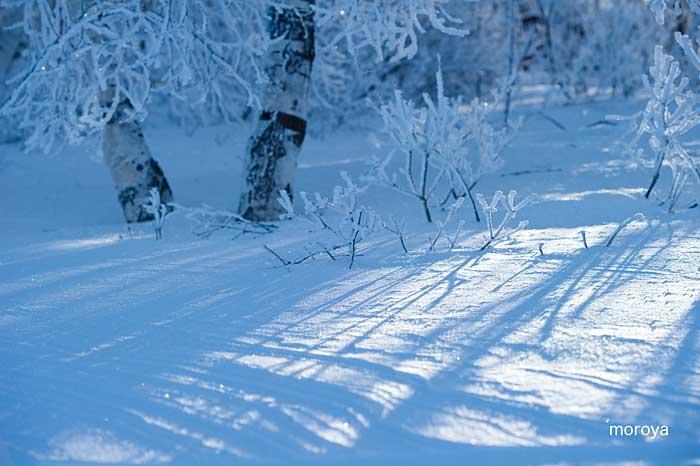白い風景_c0085877_7115425.jpg