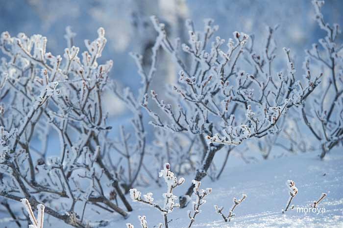 白い風景_c0085877_7121357.jpg