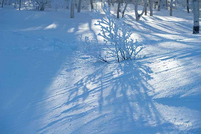 白い風景_c0085877_712595.jpg