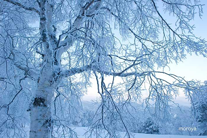 白い風景_c0085877_7161118.jpg
