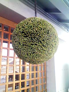 杉だま_b0172882_23225248.jpg