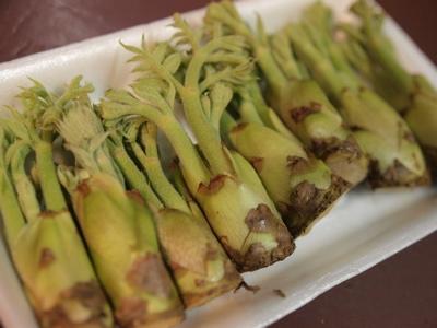 春野菜2_f0232994_6104315.jpg